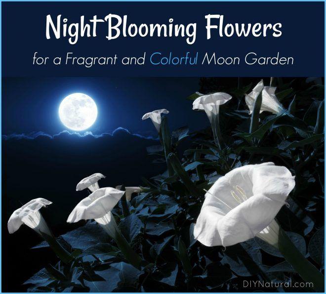 25+ best White gardens ideas on Pinterest | White flowers ...