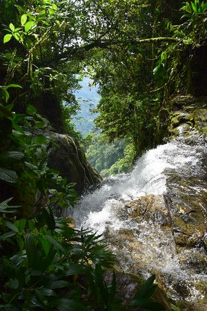 RV-Dreams Journal: Tree Of Life Diamante Falls Adventure - (Las Tumbas, Costa Rica)