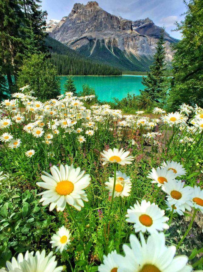 Emerald Lake – British Columbia – Yoho National Park – Canada