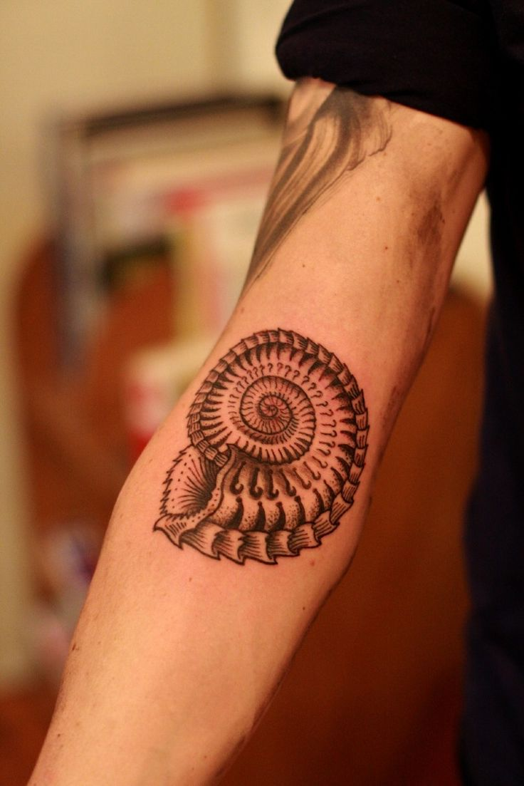 40 shell tattoos make you sea