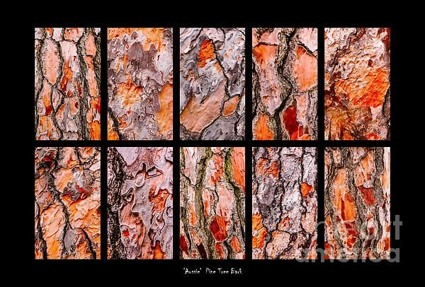 Pine Tree Bark Textures Montage.  Australian Tree Bark Series by Lexa Harpell. A collection of Aussie tree bark images. Taken from my travels around Australia. Add a splash of COLOUR and UNIQUE LOOK! Visit my photo gallery and get a beautiful Fine Art Print, Canvas Print, Metal or Acrylic Print OR Home Decor products. 30 days money back guarantee on every purchase so don't hesitate to add some AUSTRALIAN INTIMACY in your home.