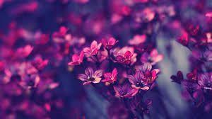 Znalezione obrazy dla zapytania flower