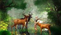 Fondos De Navidad Con Hadas En Hd Gratis 9 HD Wallpapers