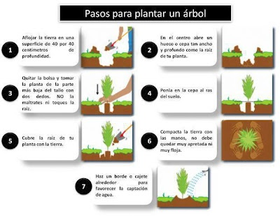 Pasos para plantar un árbol: At Home, Tree, Plantas Del, Orchard, Trees, Steps, Like Planting