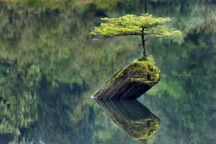 A little tree on a log protruding from the water in Port Renfrew, British Columbia (by Ireena Nieuwenhuis-Worthy)
