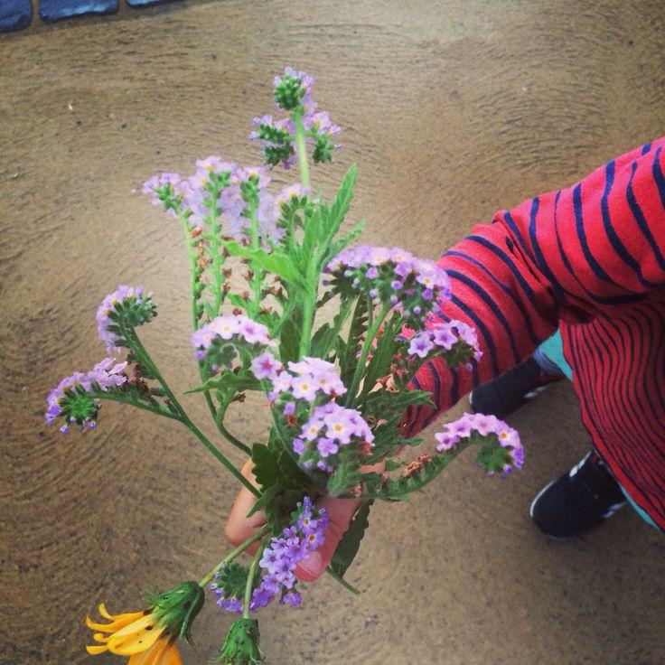 #wild #flowers www.mskotravels.com