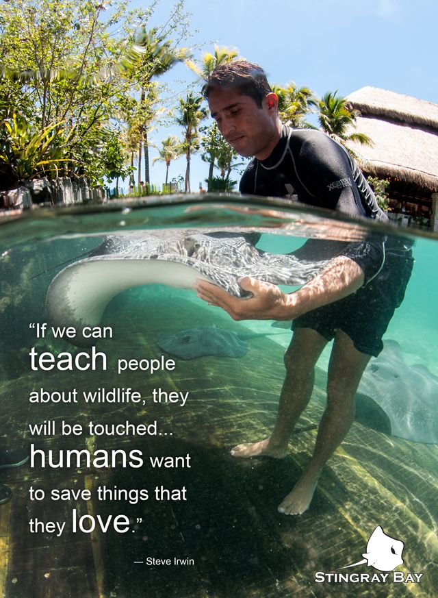 Sub Sea Systems — Our World: Inspirational Images — Part Three If we can teach people about wildlife, they will be touched... humans want to save things that they love. Steve Irwin #InspirationalQuotes Inspirational Quotes