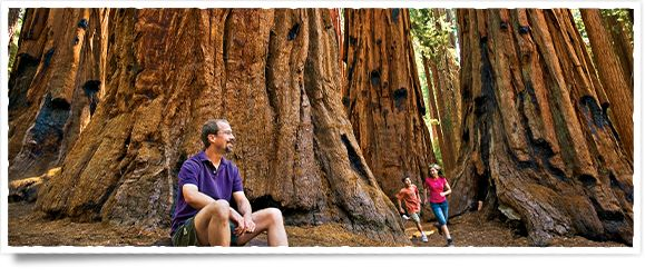 Welcome to Sequoia National Park and Kings Canyon National Park in California