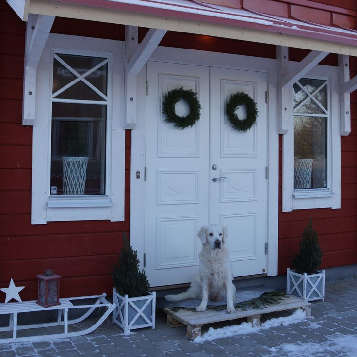 Golden retriever, pardörr, timmerhus, timber house, loghouse, dalarna, sweden, vackrahus, star, vackra hus, julstämning, xmas