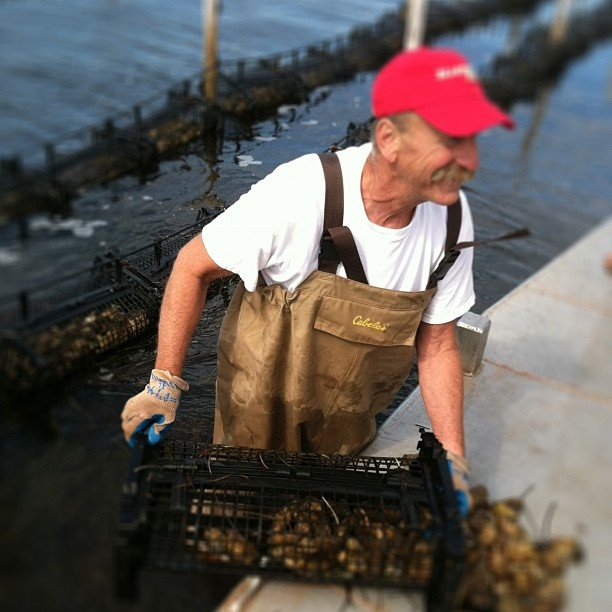Oyster Vacation: 12 Best PEI International Shellfish Festival Images On