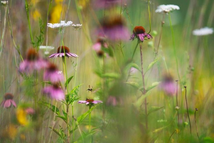 Picture of bees in wildflowers