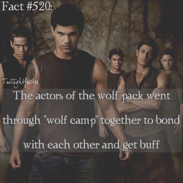 WEBSTA @ twilightfactss - ~Starting today, this week will be Quileute Week. I meant to start yesterday, but I forgot-Autumn{#twilightsaga#newmoon#wolfpack#quileute#twifact520}