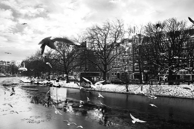 Gulls, via Flickr.