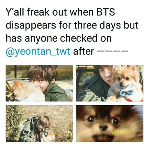 Poor yeontan ! Don't worry daddy loves you ! | BTS| Memes & Twts