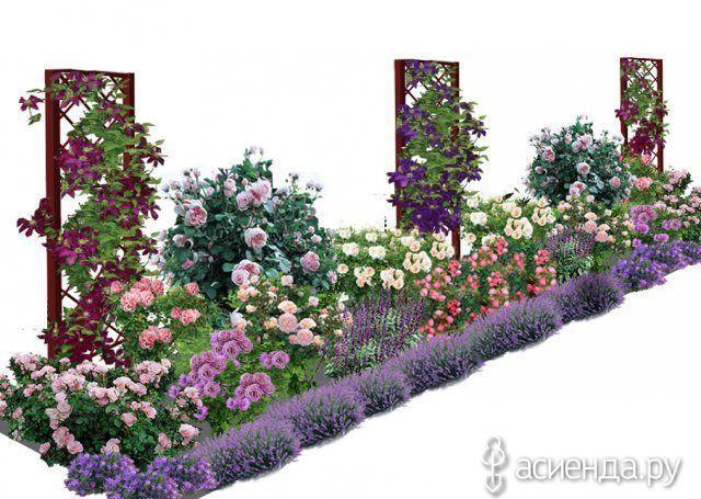 Лианы. Клематисы. Применение в саду.: Дневник пользователя Светлана Рогозенкова