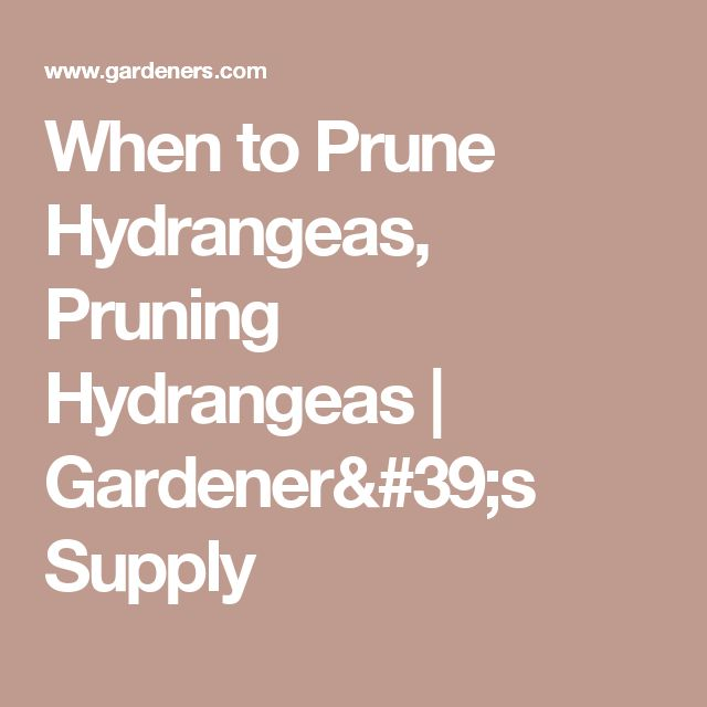 When to Prune Hydrangeas, Pruning Hydrangeas | Gardener's Supply