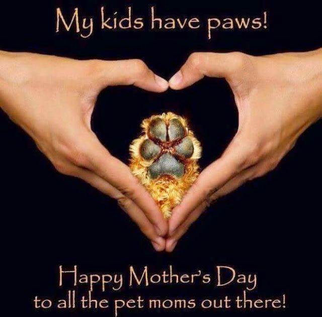 RAINA'S CAT RESCUE: Happy Mother's Day to all the Pet Moms