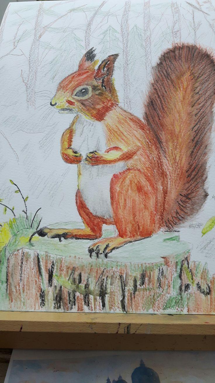 Tufty the squirrel
