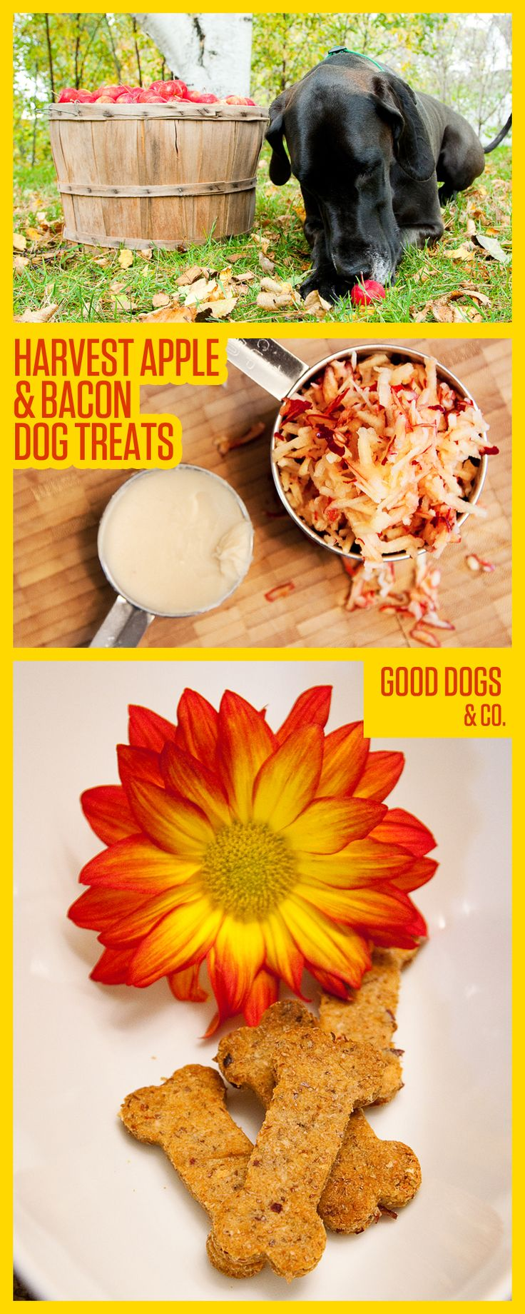 Harvest Apple & Bacon Dog Treats make a great holiday treat for your pup! Happy Thanksgiving!