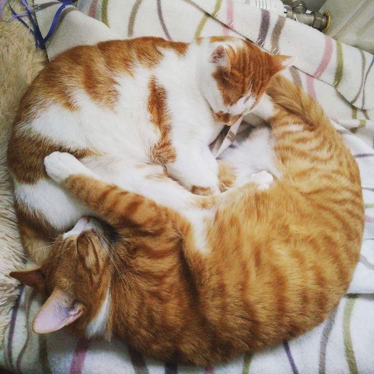 Ein seltener Moment der Ruhe für meine beiden Floofballs ift.tt/2HFarDp – Aww …   – Adorable Animals