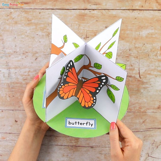 3d Butterfly Life Cycle Craft Life Cycle Craft Butterfly Crafts