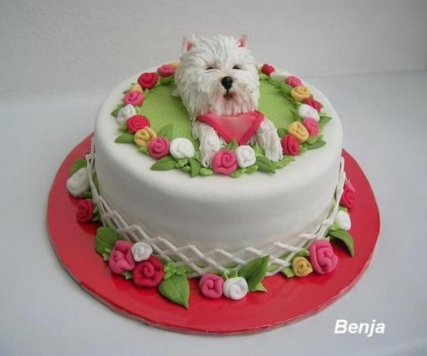 Another new style of Westie cake!  Source: http://cakecentral.com/gallery/1637481/west-highland-white-terrier