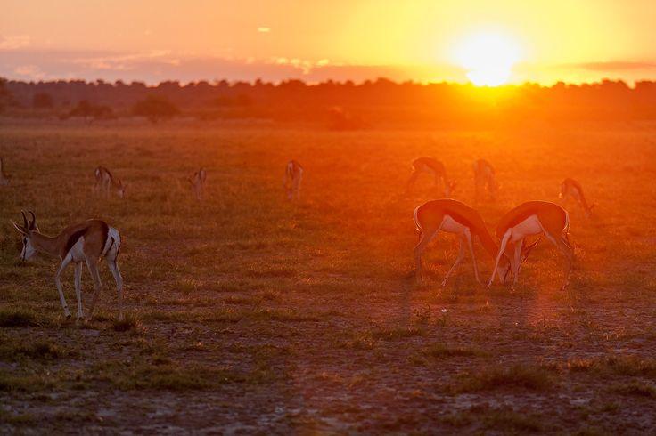 Beautiful Botswana