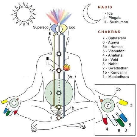 Nadis and chakras