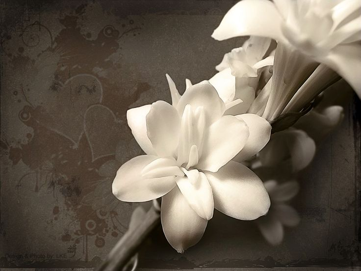 best  white flower wallpaper ideas on   floral, Beautiful flower