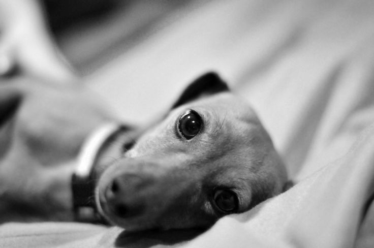 Penny lays on the bed 3 | by houstonryan