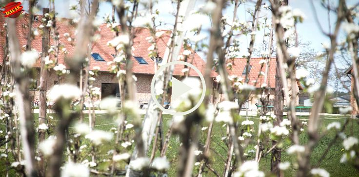 Vakantiehoeve Berckelaer ligt in het hart van de Waaslandse fruitteelt. De hoeve is verbonden met het fruitbedrijf Berckelaer, waar appels en vooral peren op een milieubewuste manier geteeld worden. De boomgaard komt hier letterlijk tot aan de voordeur. Je kan er uiteraard een wandeling door maken, wat zeker tijdens de bloesemperiode een waar feest voor de zintuigen is!