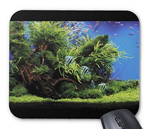 エンゼルフィッシュ水槽のマウスパッド:フォトパッド( 世界の熱帯魚シリーズ ) (全景) 熱帯スタジオ http://www.amazon.co.jp/dp/B014H8WP8A/ref=cm_sw_r_pi_dp_O-odwb02H82MB