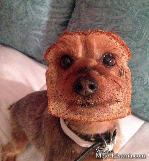 Primero unas curiosidades sobre perritos y después a disfrutar de estas hilarantes fotos de perros.   La 1ª criatura viviente en ser enviada al e...