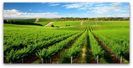 Take a private wine tour in McLaren Vale