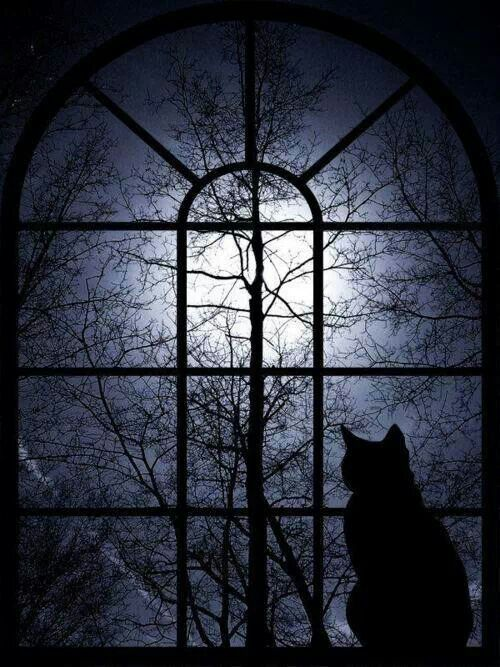 Image result for Rumi the madmen have seen the moon in the window; they are running to the roof with ladders