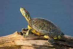 30 Best Squirt The Turtle Images On Pinterest The Turtles Finding Nemo And Adorable Animals