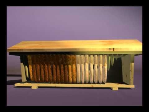 "EXCELLENT  Video that shows the ""Inside"" workings of a Top Bar Hive .... a must watch for New Beekeepers!!!"