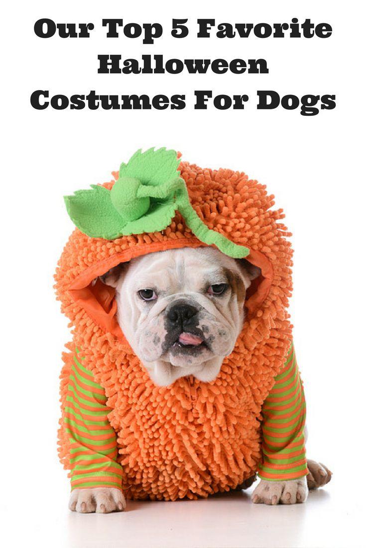 131 best images about Fellow Dog Blog Websites We Love on Pinterest