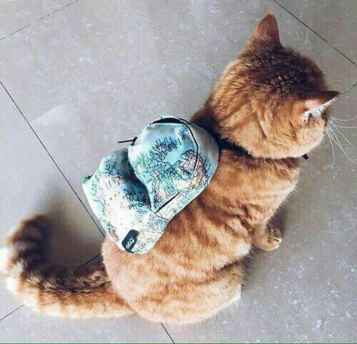 A cat backpack? A catpack? I'm not sure what we'd do with it, but we know we want one! And the cat...
