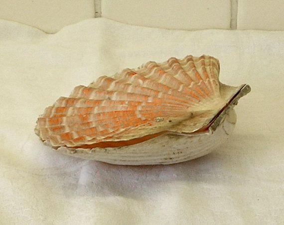Black swirl pattern ***MORE PATTERNS AVAILABLE Ring Dish Scallop Shell Decorative Dish