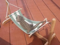 bearded dragon hammock - Google Search