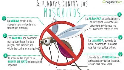 6 plantas contra los mosquitos