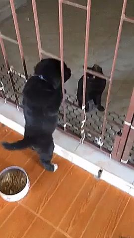 Come on! You can cross the fence – Animal Funny Video