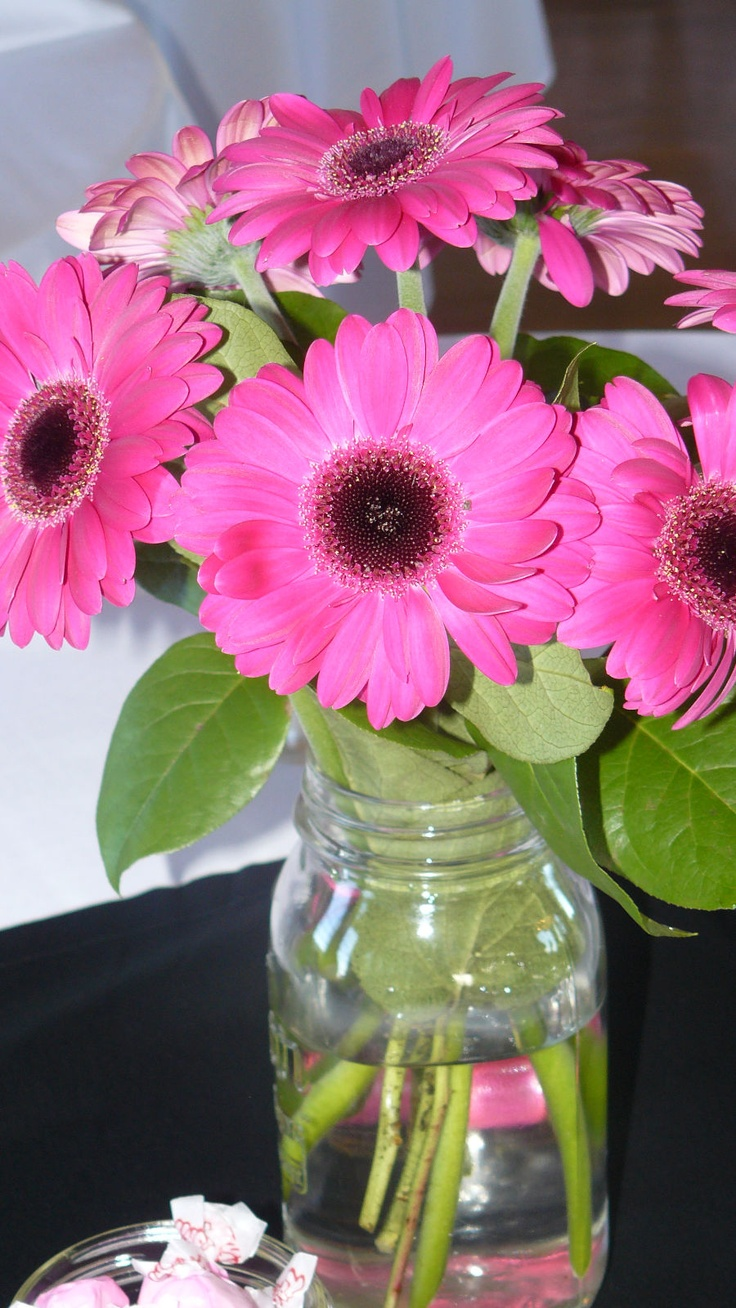 Best images about gerber daisies on pinterest