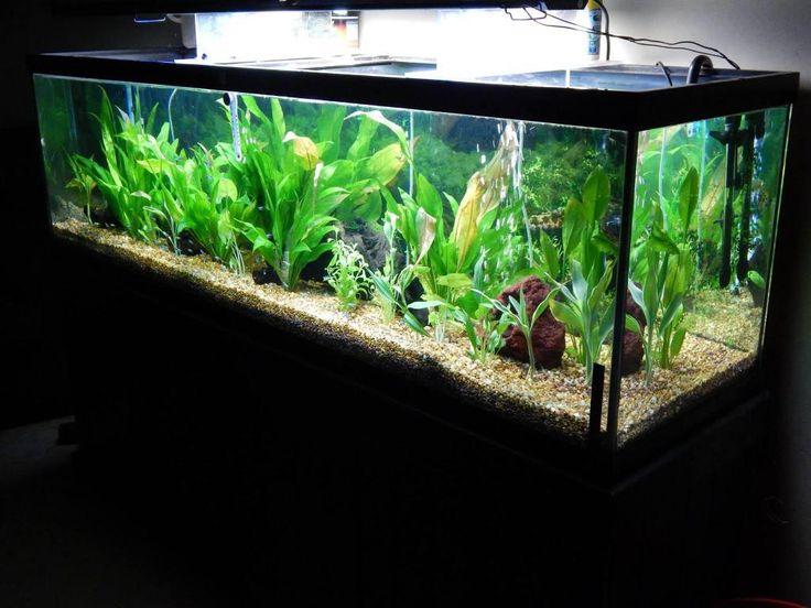 125 gallon glass aquarium aquarium ideas pinterest for 100 gallon fish tank stand