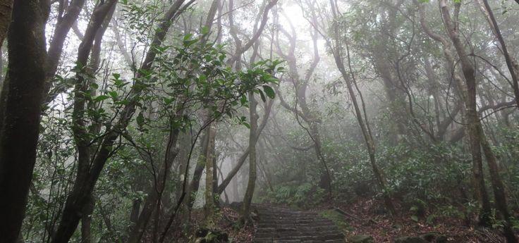 Taipei under the water curtain – Regenwetteraktivitäten für Taipei