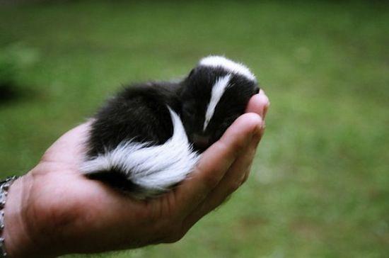 cute little skunk, pepe le pew?? :)