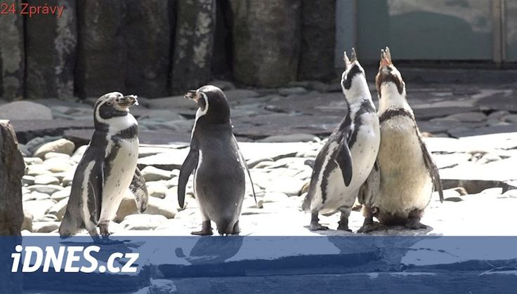 Pražská zoo rozmístila platební kiosky, pomohou zachránit ohrožené druhy