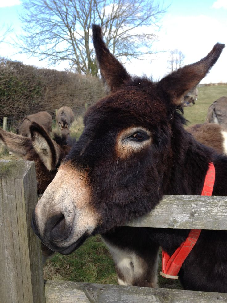 Donkey Sanctuary friend, near Sidmouth, Devon.  I love it here.  It's rescued donkeys all over the world.  So cute.  Visit if you are near and take a picnic or eat at the restaurant.