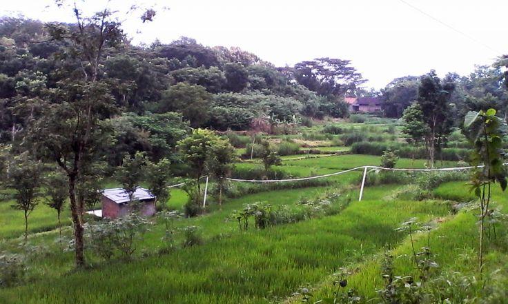 Pemandangan di Suatu Desa dekat dengan Pengunungan.